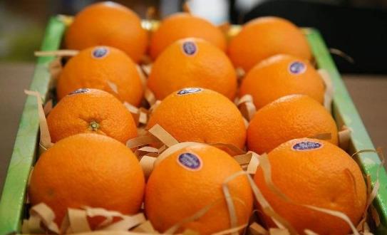 敲警鐘!因假冒知名水果品牌 13人被判刑